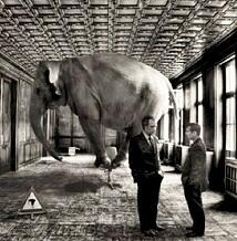 elephant in the business room